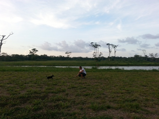 BELIZE 2 PERFECT PUPPY (14)