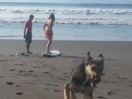 SURFERS PARADISE (3)